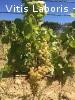 Stage viticulture et/ou oléiculture