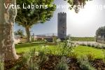 Salarié viticole polyvalent / tractoriste (H/F)